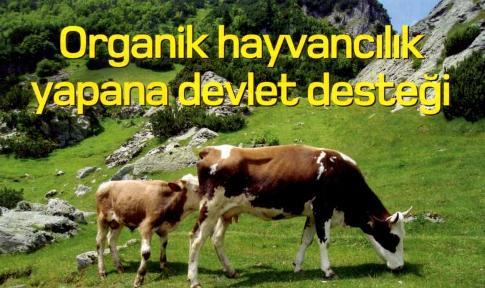 organik hayvancilik