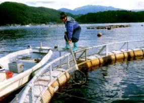 Su Ürünleri Yetiştiriciliği İşi Yapabilirsiniz