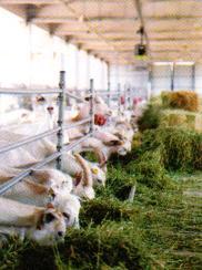 Keçi Çiftliği Kuran Kadın Girişimcinin Başarısı
