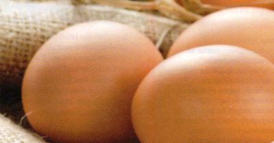 Türk yumurta sektörünün yıldızı parlıyor
