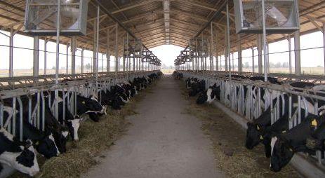 Hayvancılık Teşvikler Sayesinde Büyümekte