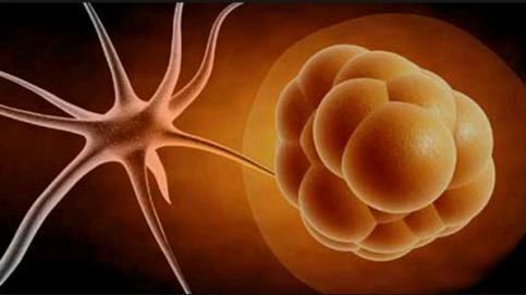 Kök Hücre Yöntemiyle Saç Kökü Hücresi Üretildi