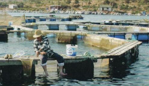 Deniz Hıyarı Üretmek – Deniz Hıyarı Yetiştiriciliği