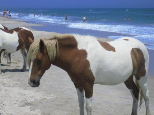 Amerika, Assateague Beach