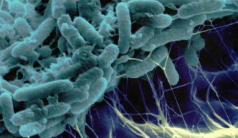 Bakteri Biyofilmleri