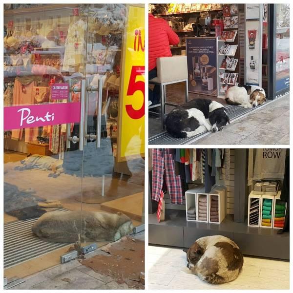 penti sokak hayvanlari 1 - Sosyal Sorumluluk - Yardımseverlik - Viral Reklamın Kralı