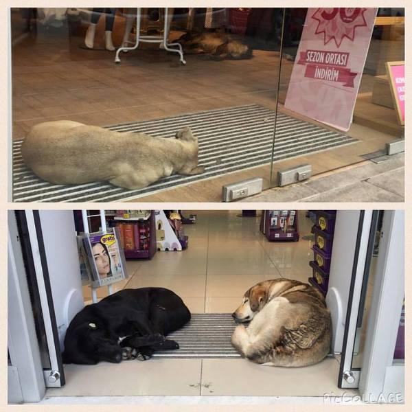 penti sokak hayvanlari - Sosyal Sorumluluk - Yardımseverlik - Viral Reklamın Kralı