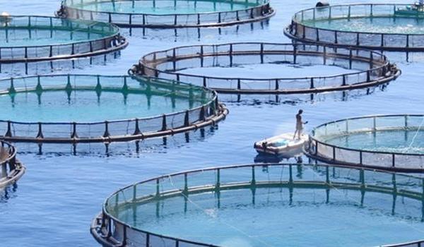 Su urunleri - Su ürünleri pazarı çok kazandırıyor