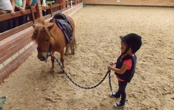 at yetiştiriciliği ile ilgili görsel sonucu